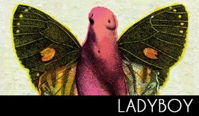 ladyboydecouverte